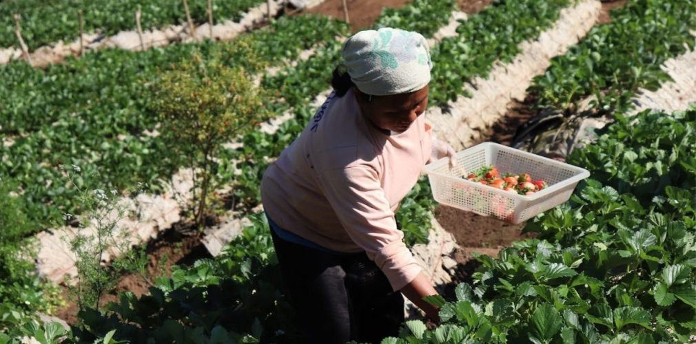 cover-ดอยคำ เกษตรเพื่อชุมชน ผลิตผลเพื่อคนไทย